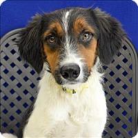Adopt A Pet :: Baxter - Fort Davis, TX
