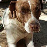 Adopt A Pet :: Sis - Southbury, CT