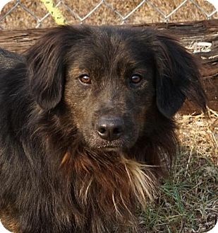 Retriever (Unknown Type) Mix Dog for adoption in Toccoa, Georgia - Boomer