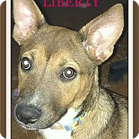 Adopt A Pet :: Liberty - Tempe, AZ