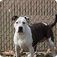 Adopt A Pet :: Emerald - Chula Vista, CA
