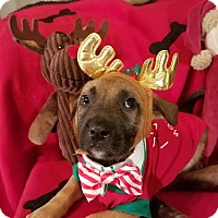 Adopt A Pet :: Tinsel - Foster Needed - Detroit, MI