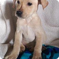 Adopt A Pet :: Eddie (MD-Kelly) - Newark, DE
