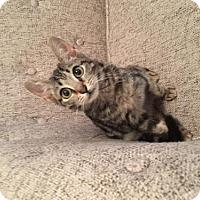 Adopt A Pet :: Phyllis - Brooklyn, NY