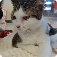 Adopt A Pet :: June - Fort Pierce, FL