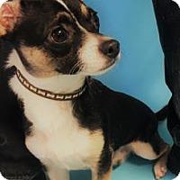 Adopt A Pet :: Rupert - Monroe, MI