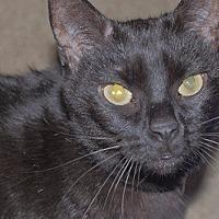 Adopt A Pet :: Gracie 2 - Burbank, CA
