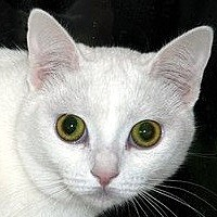 Adopt A Pet :: Salty - Auburn, CA