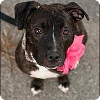 Adopt A Pet :: Cinderella - Hilliard, OH
