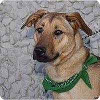 Adopt A Pet :: Chet - Newcastle, OK