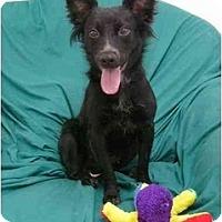 Adopt A Pet :: Dora - Mocksville, NC