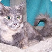 Adopt A Pet :: Yvonne - Colorado Springs, CO