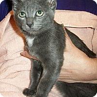 Adopt A Pet :: Tara - Reston, VA