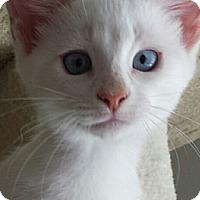 Adopt A Pet :: Caesar - Irvine, CA