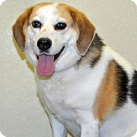 Adopt A Pet :: Pickles - Port Washington, NY