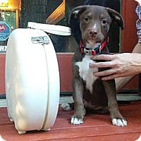 Adopt A Pet :: Taboo - Atlanta, GA