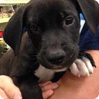 Adopt A Pet :: Bugs - Gainesville, FL