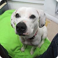 Adopt A Pet :: Freckles - Lake Odessa, MI