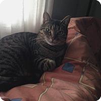 Adopt A Pet :: Cissy - Toronto, ON