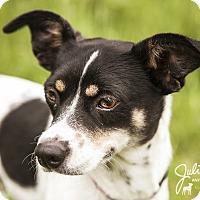 Adopt A Pet :: Millie -Sweet Girl! - Kirkland, WA
