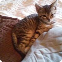 Adopt A Pet :: Clover - Fairborn, OH