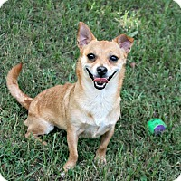 Adopt A Pet :: Buddy - Lufkin, TX
