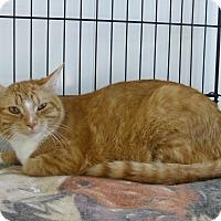 Adopt A Pet :: Sunshine - Redwood Falls, MN