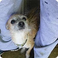 Adopt A Pet :: Seth - Wyanet, IL
