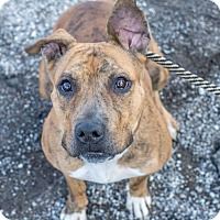 Adopt A Pet :: Pickles - Cleveland, OH