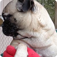 Adopt A Pet :: China - Crump, TN