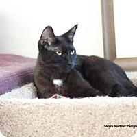 Adopt A Pet :: Mellie - Marietta, GA