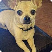 Adopt A Pet :: Poppy - Lakeland, FL