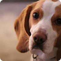 Adopt A Pet :: Cooper - cicero, NY