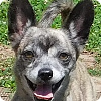 Adopt A Pet :: Karla - MINNEAPOLIS, KS