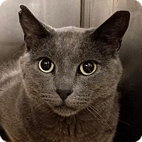 Adopt A Pet :: Smokey - New York, NY