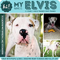 Adopt A Pet :: Elvis Presley - New Port Richey, FL