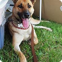 Adopt A Pet :: Olga - Mt. Airy, MD
