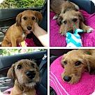 Adopt A Pet :: PIXIE