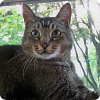 Adopt A Pet :: Waldo - Rochester, NY