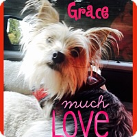 Adopt A Pet :: Grace - Beechgrove, TN