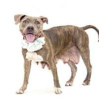 Adopt A Pet :: *LUNA - Orlando, FL