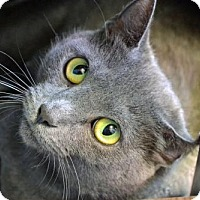 Adopt A Pet :: Gracie - Akron, OH