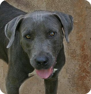 Labrador Retriever Mix Dog for adoption in Lufkin, Texas - Zelda