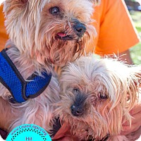 Adopt A Pet :: Annie & Jack - Bonded Pair - Staten Island, NY