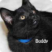Adopt A Pet :: Buddy - Idaho Falls, ID