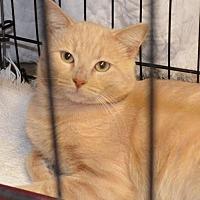 Adopt A Pet :: Rover - Trenton, MO