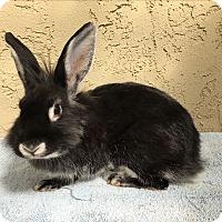 Adopt A Pet :: Landis girl - Bonita, CA