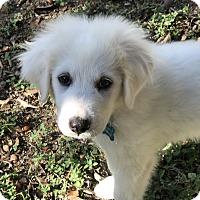 Adopt A Pet :: Camilla - Austin, TX