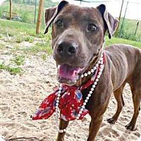 Adopt A Pet :: TROPICANA - Tavares, FL