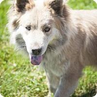 Adopt A Pet :: Daffney - Bedford, IN